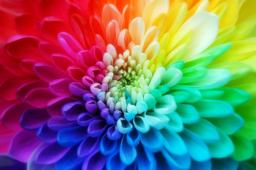 صوره ما فائدة الالوان الزاهية في الازهار , تاثير الالوان الزاهية للزهور علي العين