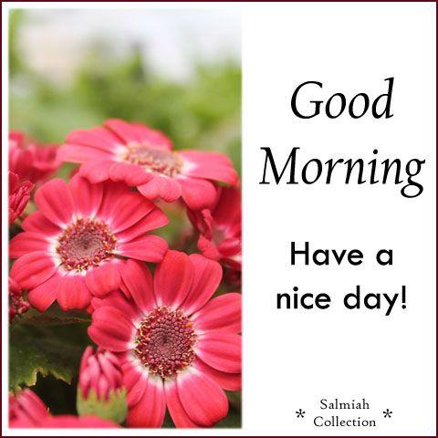 صوره صباح الورد , اجمل صباحات الزهور