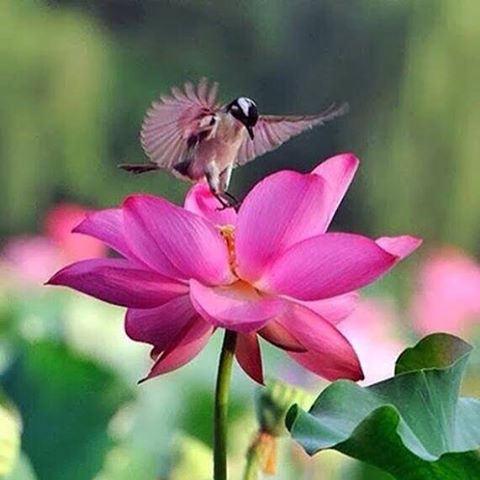 صوره مساء الورد , اجمل مساءات الزهور