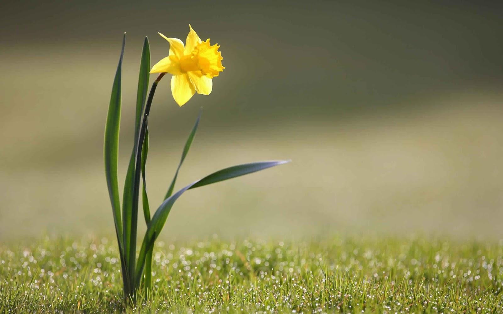 صور صور زهور , صور ازهار جميلة