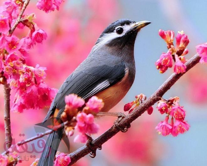 صورة صور طيور , احلى صور طيور