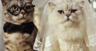 صورة صور قطط مضحكة , اجمل الصور للقطط