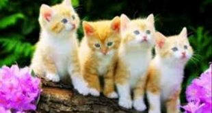 صوره قطط جميلة , اجمل قطط