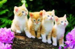 صورة قطط جميلة , اجمل قطط