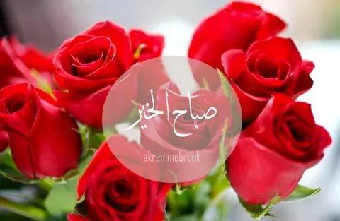 صورة صباح الورد للورد , اجمل الكلمات الصباحية المعطرة بالورد