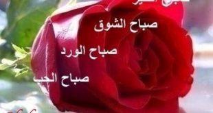 صوره صباح الورد للورد , اجمل الكلمات الصباحية المعطرة بالورد