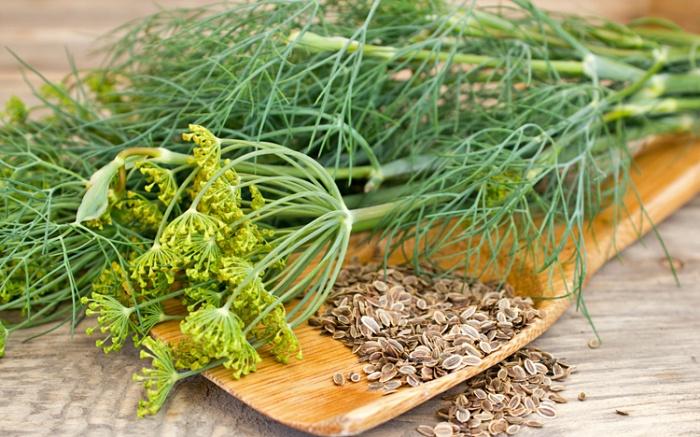 صورة فوائد بذور الشبت , الامراض الي تعالجها بذور الشبت