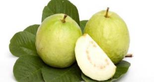 صورة اضرار ورق الجوافه , فوائد واضرار اوراق الجوافة بالتفصيل
