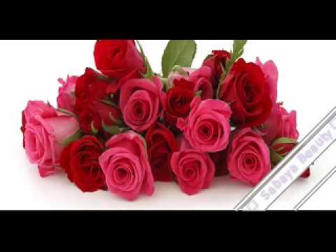 بالصور ازهار جميلة , اجمل الورود 503 10