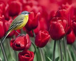 بالصور ازهار جميلة , اجمل الورود 503 2