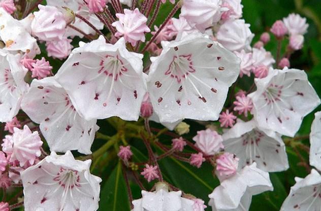 بالصور ازهار جميلة , اجمل الورود 503 5