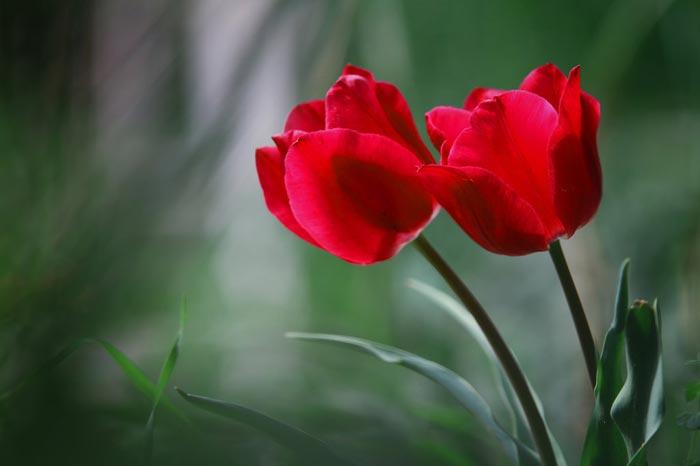 بالصور ازهار جميلة , اجمل الورود 503 8