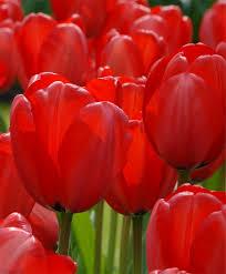 صوره ازهار جميلة , اجمل الورود