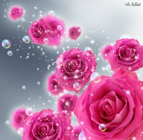 بالصور صور ورد جديد , اجمل صور ورد 3777