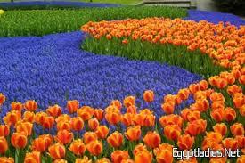بالصور صور ورود جميله , اجمل صور للورود 3782 10