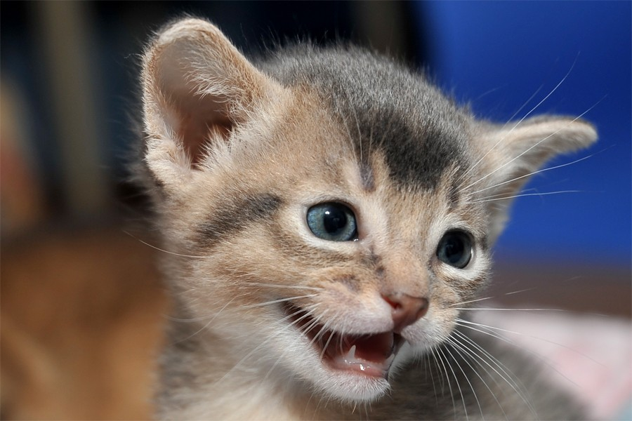 صورة صور قطط كيوت , صور اجمل قطة كيوت