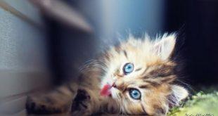 صوره صور قطط كيوت , صور اجمل قطة كيوت