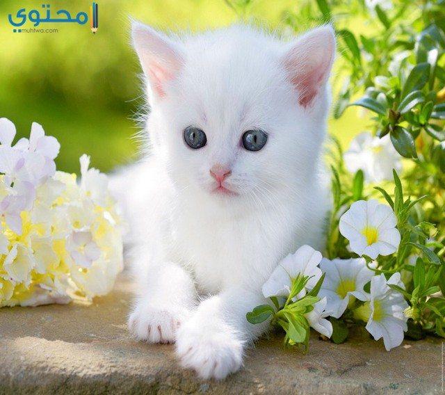 بالصور صور قطط كيوت , صور اجمل قطة كيوت 3817 3