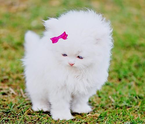 بالصور صور قطط كيوت , صور اجمل قطة كيوت 3817 4