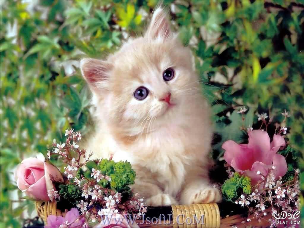 بالصور صور قطط كيوت , صور اجمل قطة كيوت 3817 5