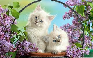 بالصور صور قطط كيوت , صور اجمل قطة كيوت 3817 6