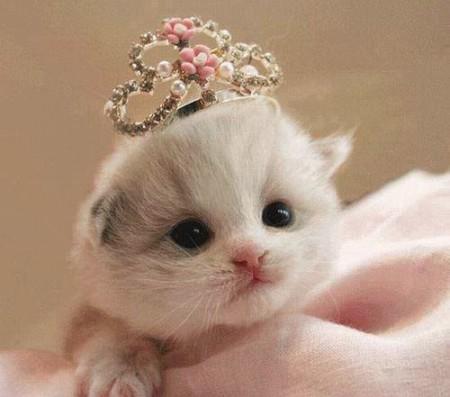 بالصور صور قطط كيوت , صور اجمل قطة كيوت 3817 7