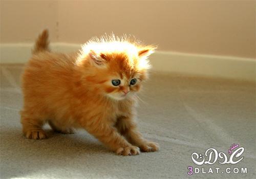 بالصور صور قطط كيوت , صور اجمل قطة كيوت 3817 9
