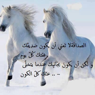 بالصور شعر عن الصديق الوفي , اجمل الكلمات عن الصديق 3825 6