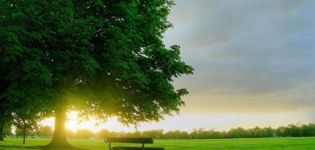 صوره اجمل ماقيل عن الصباح , اجمل الصور عن الصباح