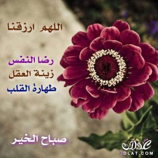 بالصور صباح البركة , صور مكتوب عليها صباح البركة 3854 7