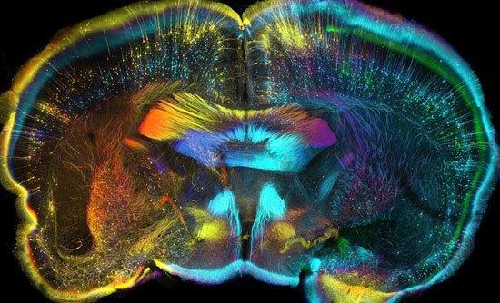 بالصور صور علمية , صور حقيقية وعلمية 3863 8