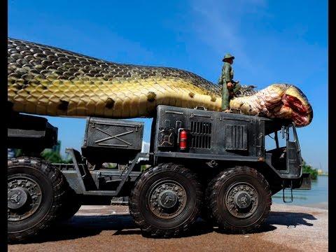 صورة اكبر ثعبان فى العالم , ماهو اكبر ثعبان فى العالم