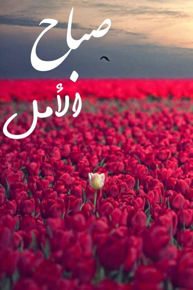 بالصور شعر صباح الخير حبيبي , صباح الخير قصيدة 402 4