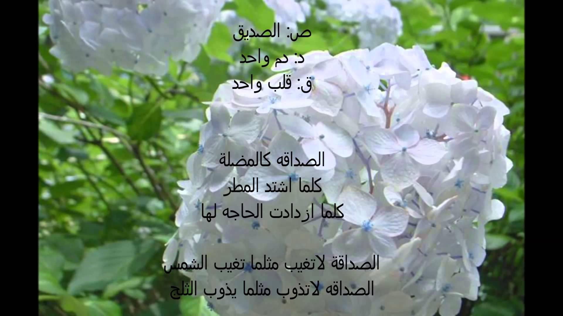 بالصور اجمل ماقيل في الصداقه , صور اجمل الكلامات عن الصداقه 4055 2