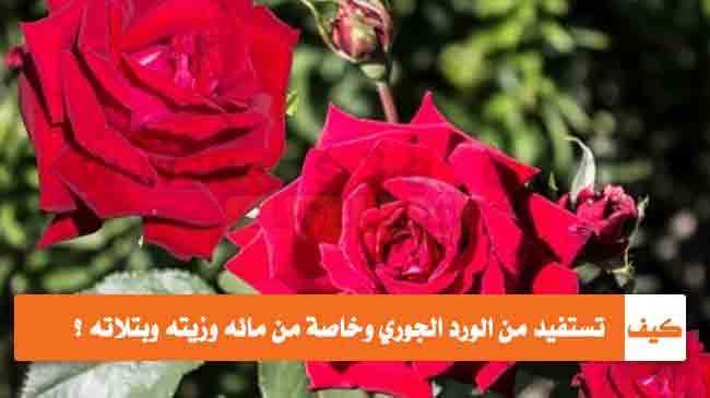 بالصور كلمات عن الورد , اجمل صور كلمات عن الورد 4098 4