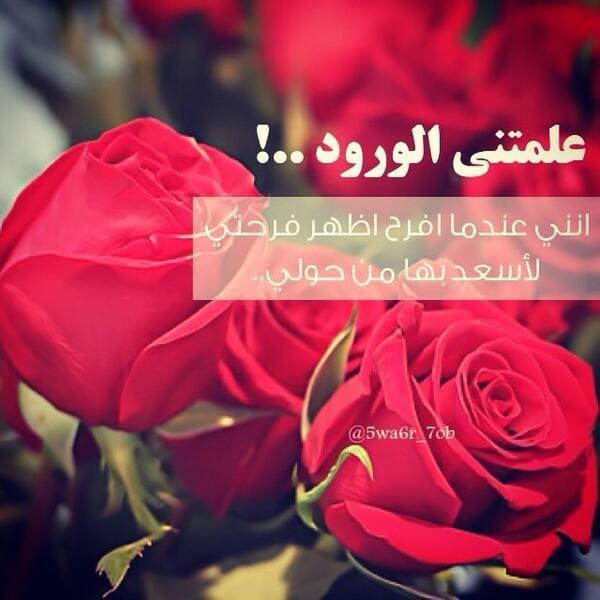 بالصور كلمات عن الورد , اجمل صور كلمات عن الورد 4098 6