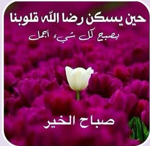 صورة صور عن صباح الخير , اجمل صور صباح الخير 481 2