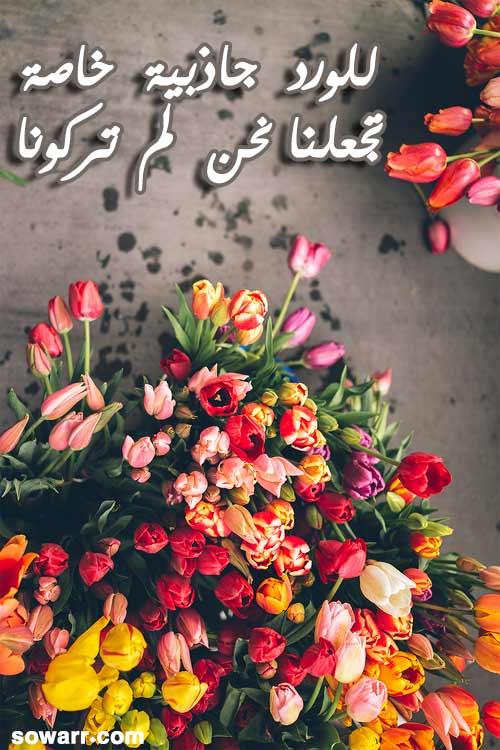 بالصور خواطر عن الورد , اجمل الكلمات عن الورد 491 4