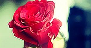 صور خواطر عن الورد , اجمل الكلمات عن الورد