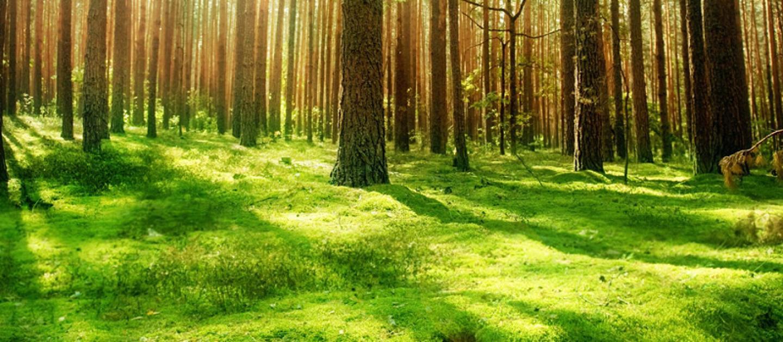 صورة مقدمة عن البيئة , حافظ على البيئه مقدمه لموضوع تعبير
