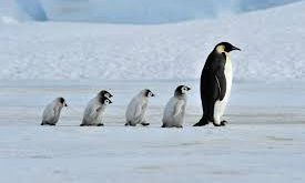 صورة نوع من انواع الطيور , ابداع الخالق في خلق الطيور