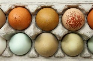 صورة هل يؤثر اختلاف لون قشرة البيض على القيمة الغذائية للبيض , سبب اختلاف لون البيض واثره على قيمته الغذائية
