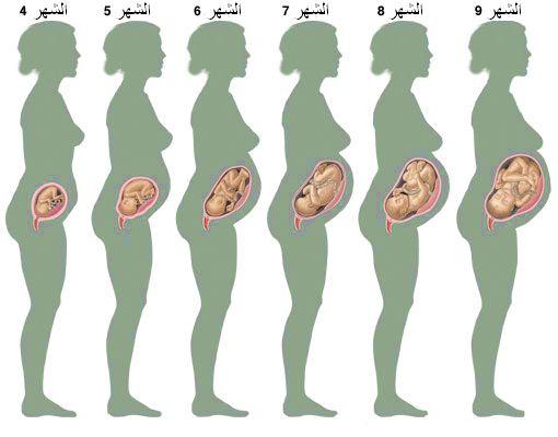 صور الشهر السادس من الحمل , شهري السادس من حملي