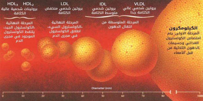 صورة ما هو الكولسترول , وظائف الكوليسترول لجسم الانسان