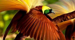 صورة واو هل هذا الطير حقيقي ,اجمل الطيور في العالم