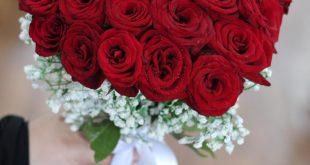 صورة اشكال رائعة من الورد الملون ،ورد طبيعي