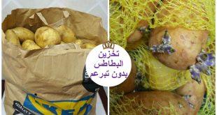 طريقة تخزين البطاطس بقشرها, احفظيها بالطريقه دي ومش هتندمي